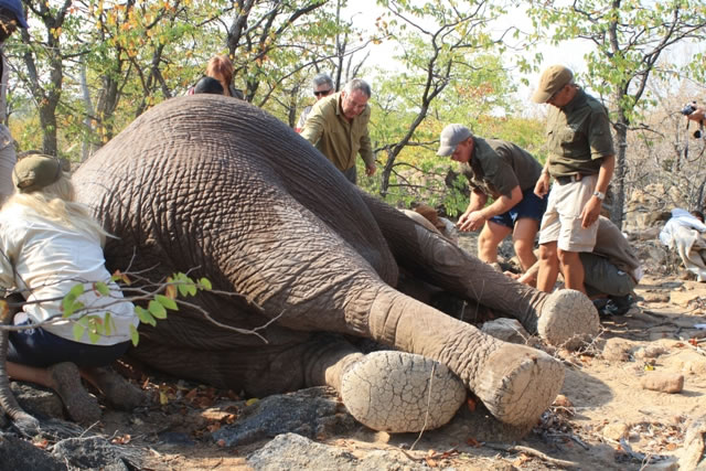 Wildside Research: Elephant & Predator Monitoring Project